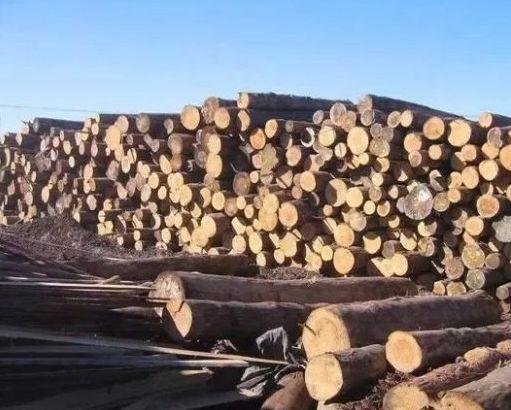 我国需求推动新西兰6月份木材出口大幅增长金属打标机